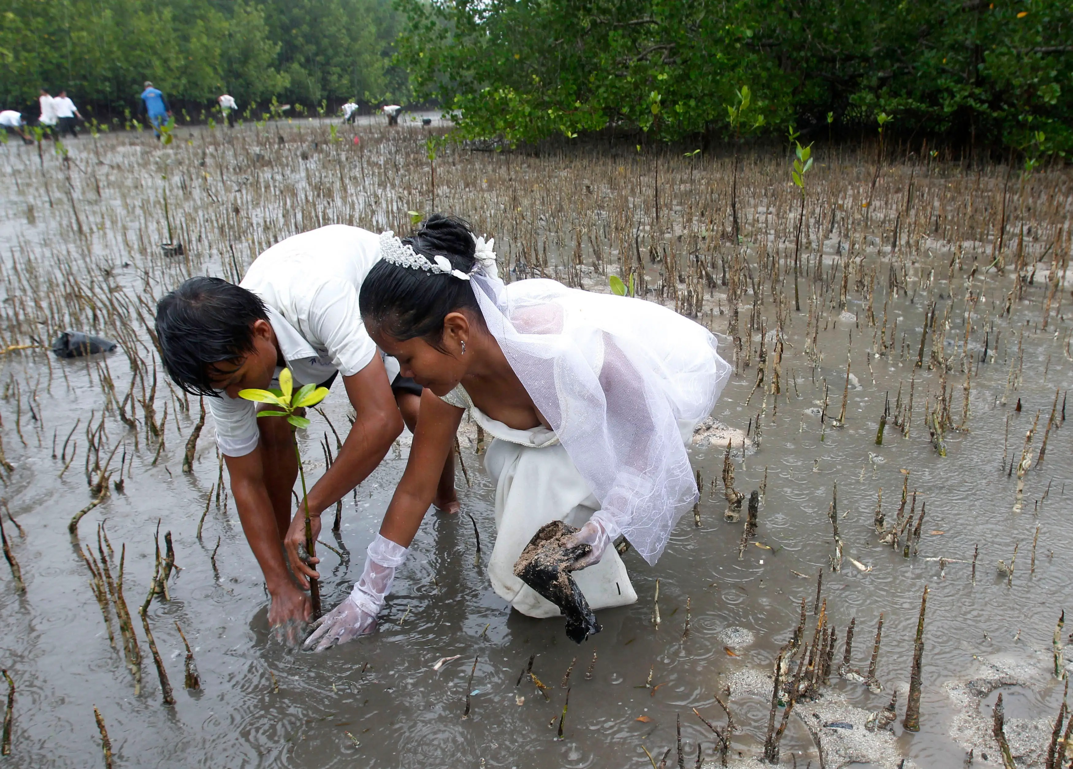 Joey Bayo and his wife Lea plant a mangrove tree after their wedding in San Jose town, Puerto Princesa, Palawan city, western Philippines.