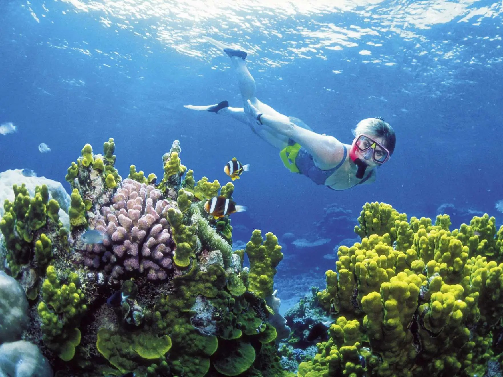 Go diving in Australia's UNESCO World Heritage Site, the Great Barrier Reef.