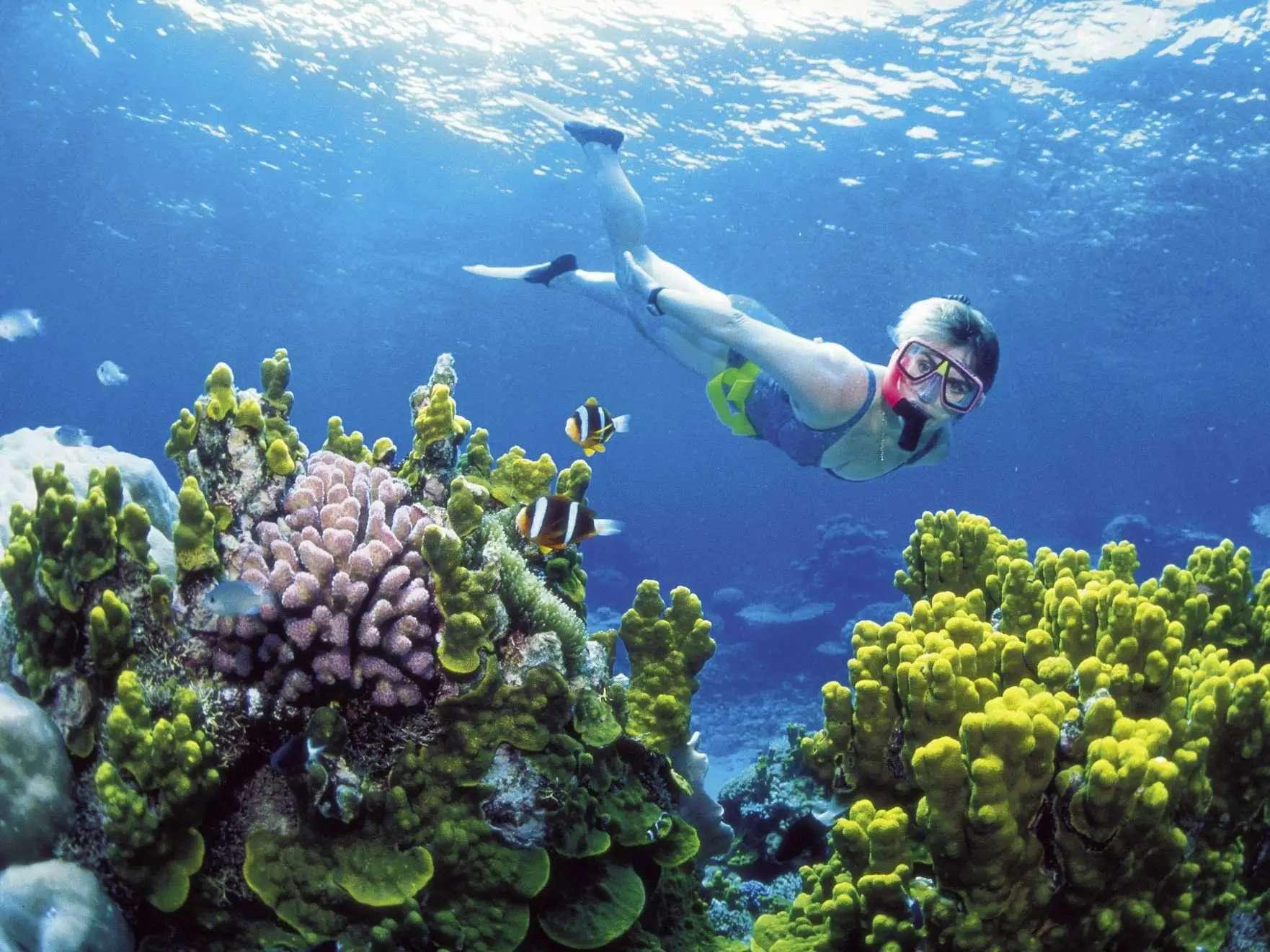 Go diving in Australia's UNESCO World Heritage Site, the Great Barrier Reef.