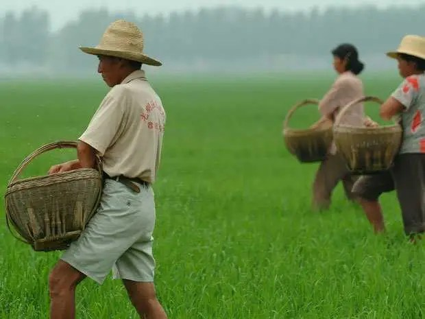 """""""Become a Chinese farmer, that's what you should do."""""""