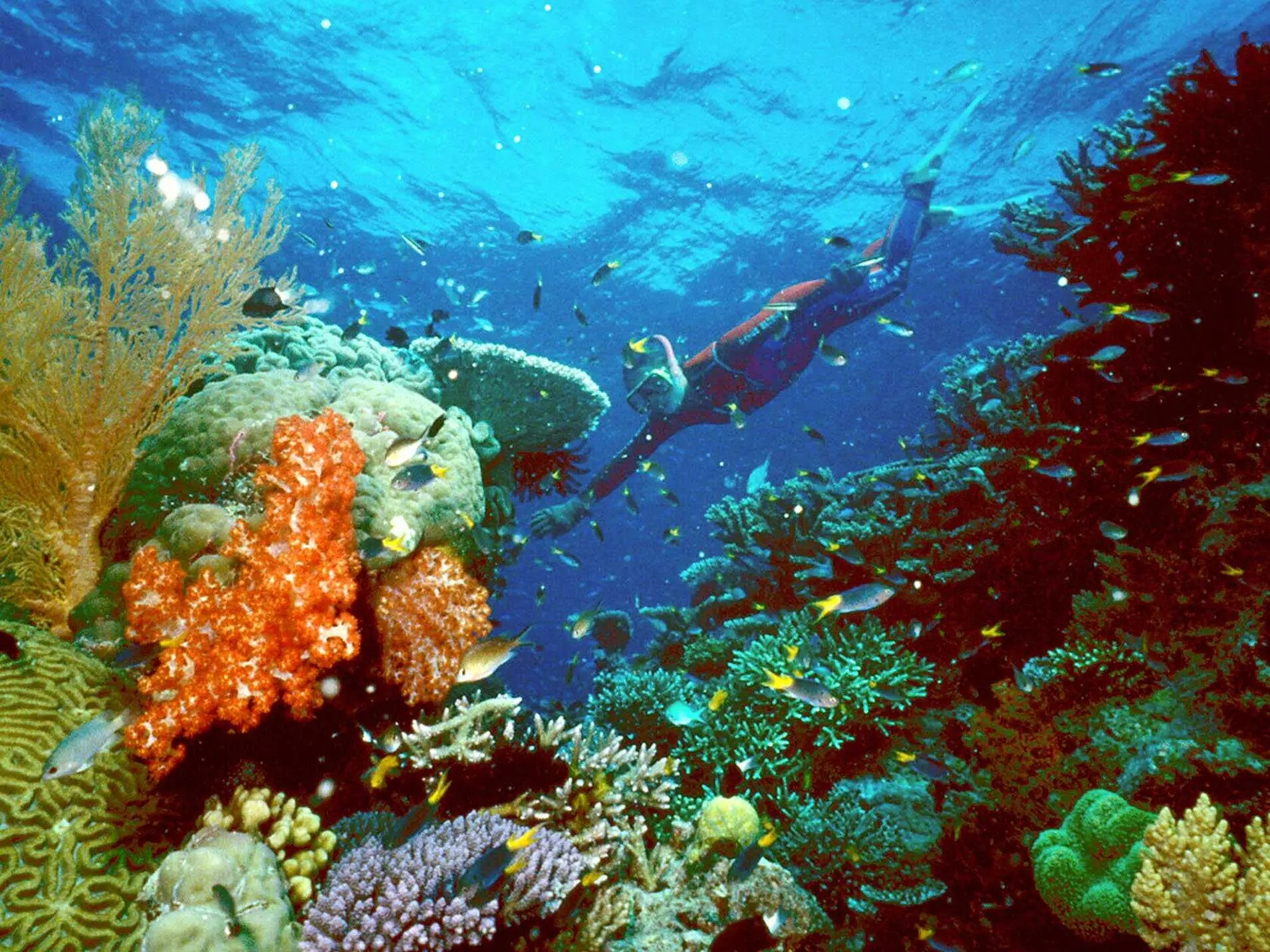 Dive into the clear blue waters of Australia's Coral Sea to see the spectacular Great Barrier Reef.