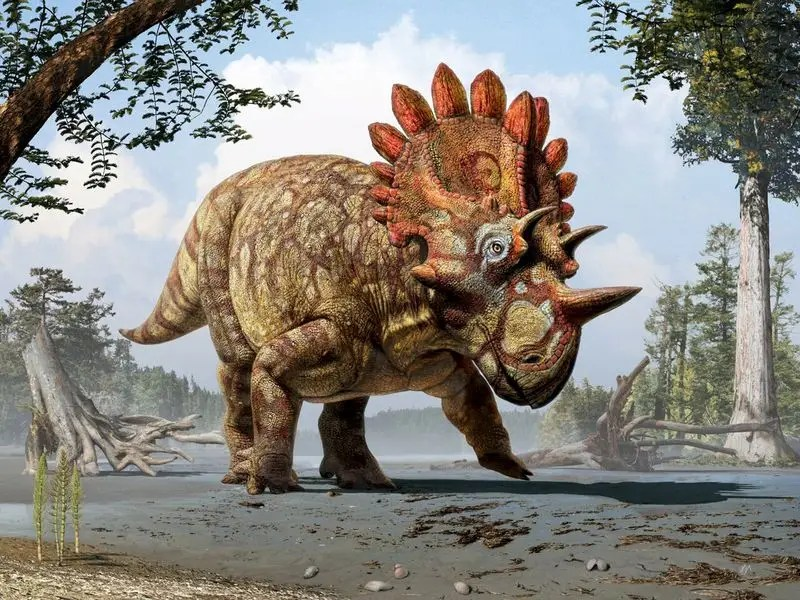An artistic life reconstruction of a new horned dinosaur scientists named Regaliceratops peterhewsi in the paleoenvironment of the Late Cretaceous of Alberta, Canada released on June 3, 2015. REUTERS/Julius T. Csotonyi/Royal Tyrrell Museum, Drumheller, Alberta/Handout via Reuters