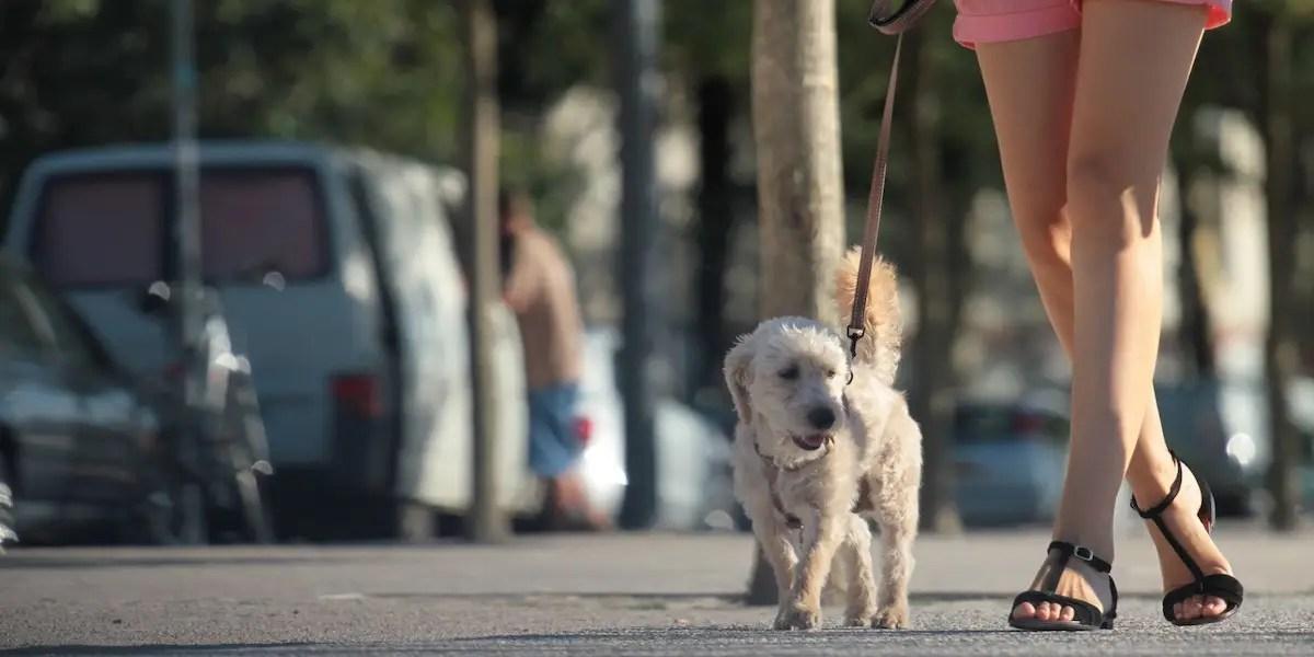 4. Dog walking and pet sitting