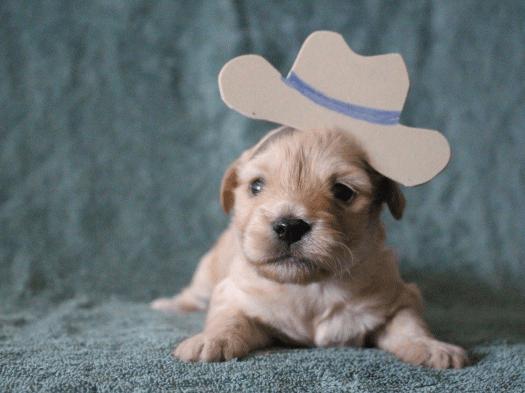 puppy cowboy costume