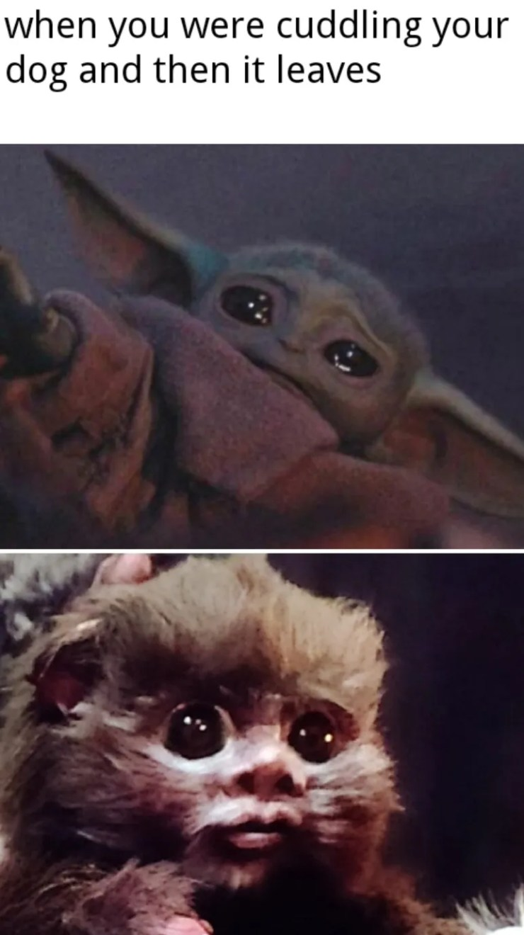 Baby Yoda Memes Are The Only Thing Getting Me Through The Rest Of