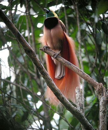 Papua New Guinea S Jungle Beauties Stuff Co Nz