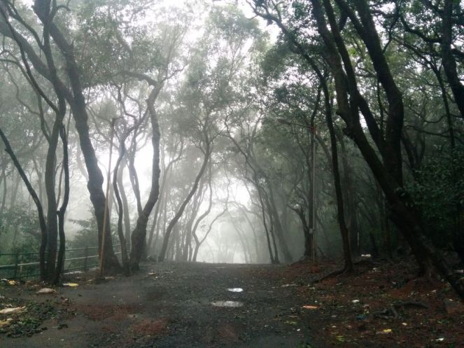 Photo of Love at first sight: Matheran 7/18 by Vineet Jain