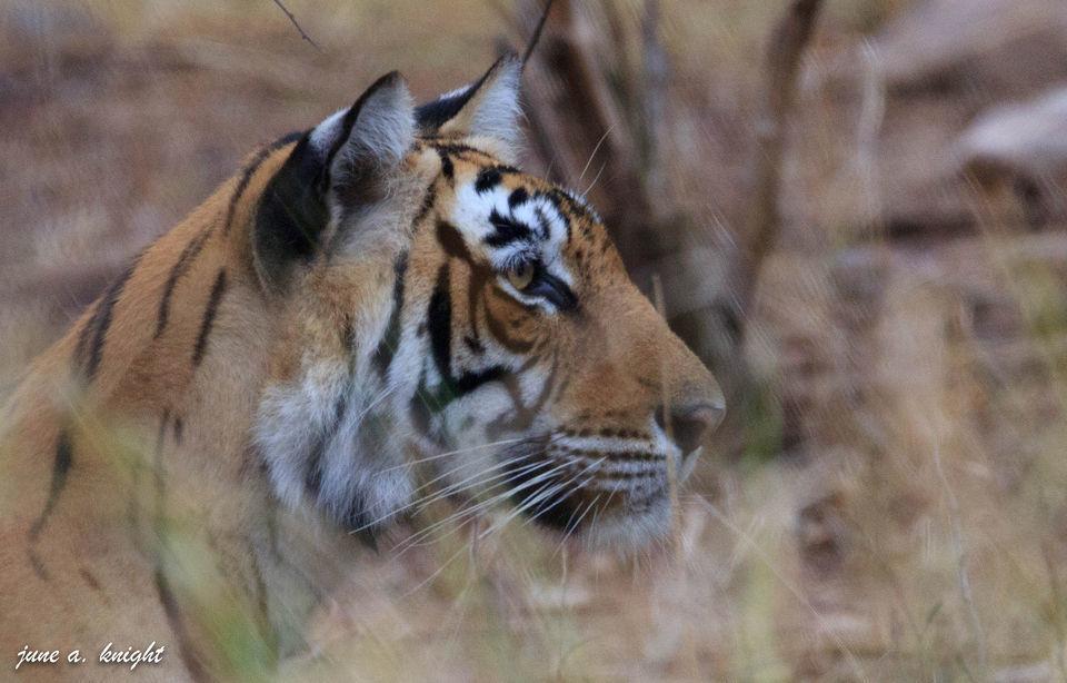 Photo of Ranthambore Tiger Reserve, Sawai Madhopur, Rajasthan, India by Disha Kapkoti