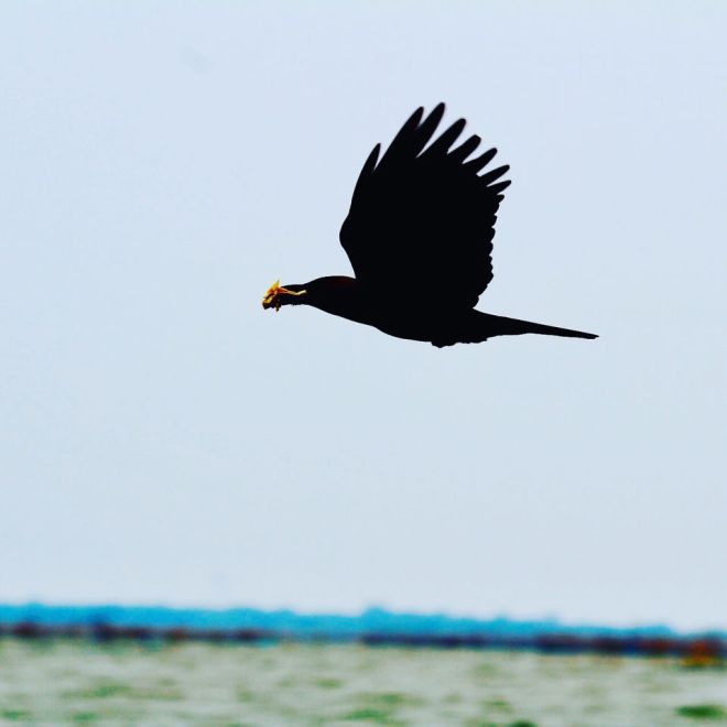 Photo of Chilika Lake, Odisha, India by Samir Anand
