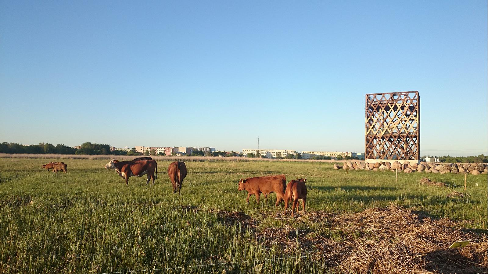 Observation Towers And Cows On The Parnu Coastal Meadow Estonia