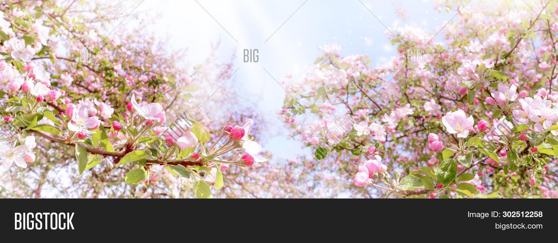 Http Www Bigstockphoto Com Image 302547946 Stock Photo