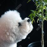 Marijuana Plant Image Photo Free Trial Bigstock