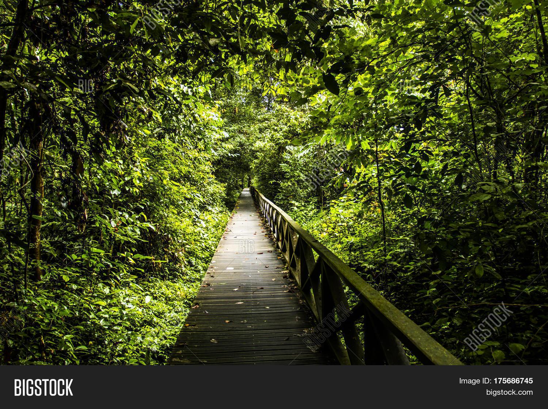 Dense Jungle Image & Photo | Bigstock