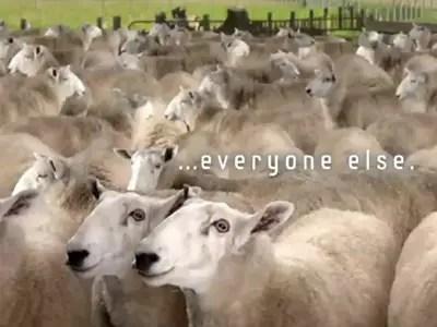 Herding