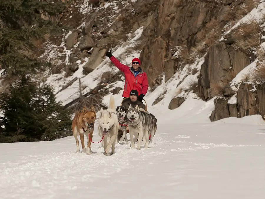Ride a dogsled through the backcountry terrain of Montana.