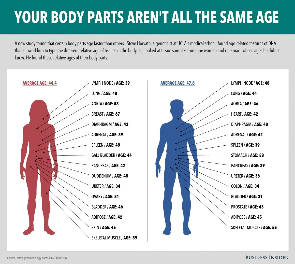 Image result for aging by tissue