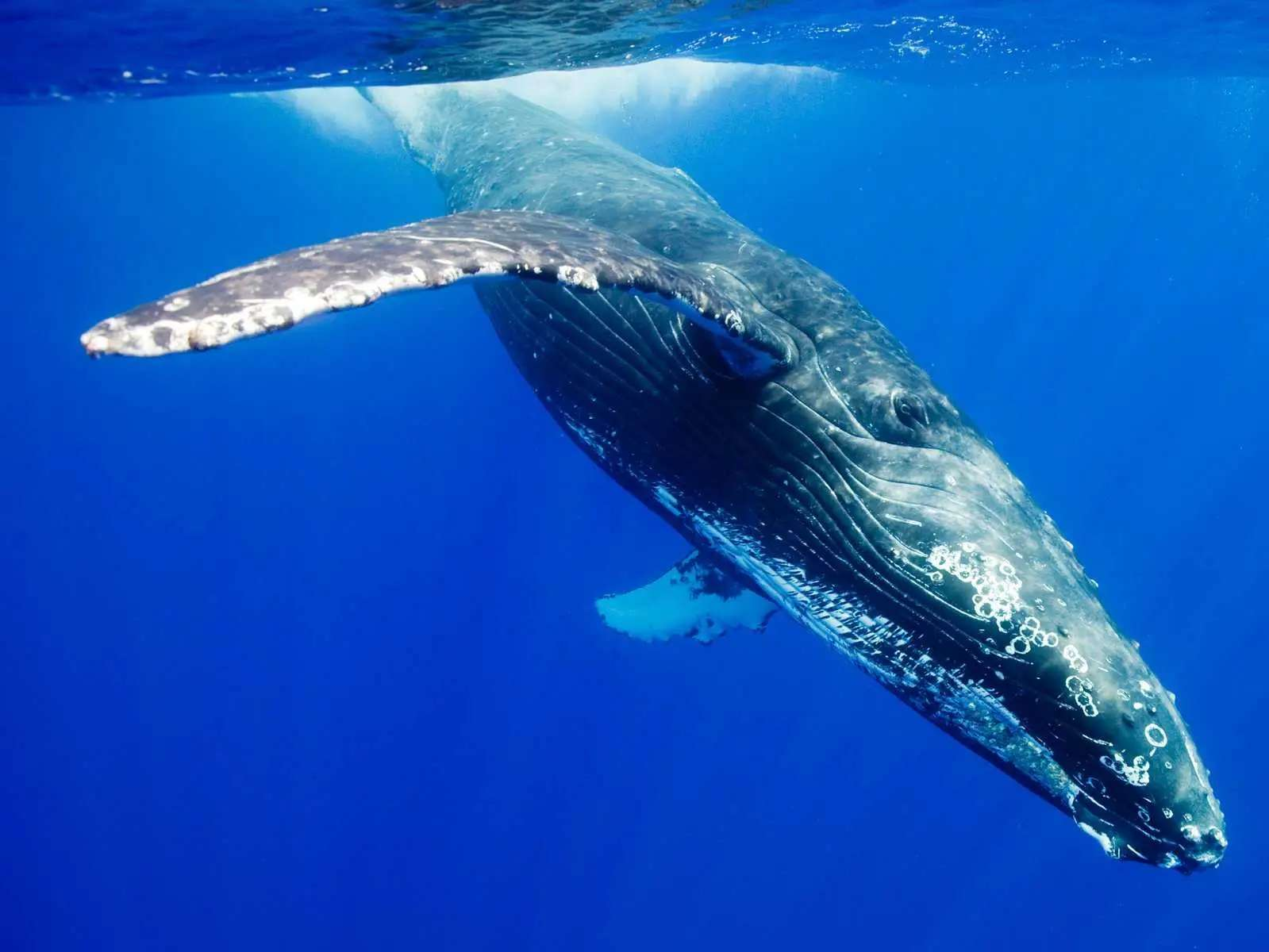 China's coal reserves weigh as much as 575 million blue whales.