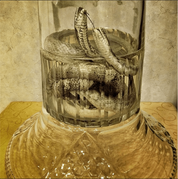 'Rice wine with vipers. #Pyongyang, North Korea. Last night in the restaurant, we were told that no alcohol would be served to observe the anniversary of Kim Jong Il's death.'
