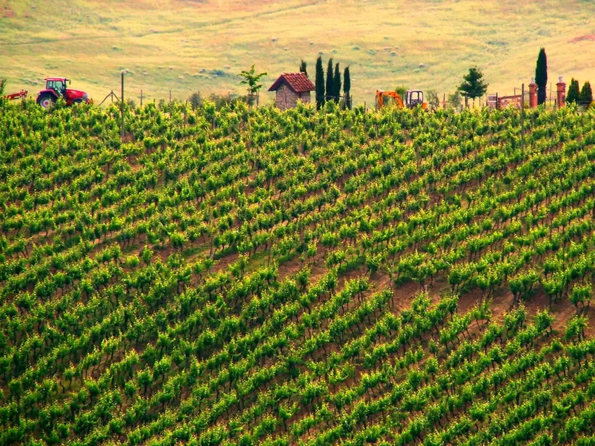 Sample Italian Chianti in the vineyards of Tuscany.