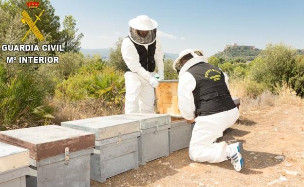 La Guardia Civil detenie a un hombre e investioga a ootro por el envenenamiento sistemático de abejas en Montesa.