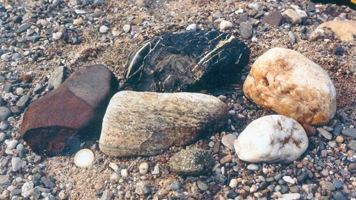 Typical pebbles from the Pleistocene gravel of the river Main show the transport history of the river.  On the right two white quartz crystals, above a black pebble slate (Lydite) from the Franconian Forest, in front in the middle a rubble made of banded gneiss, which comes from the basement of Eastern Bavaria;  on the left a brown-red sandstone.