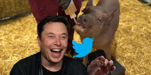 How Twitter Reacted To Elon Musk's Neuralink Brain ...