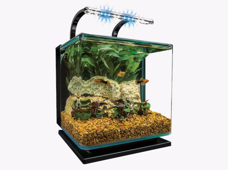 The best betta fish tank