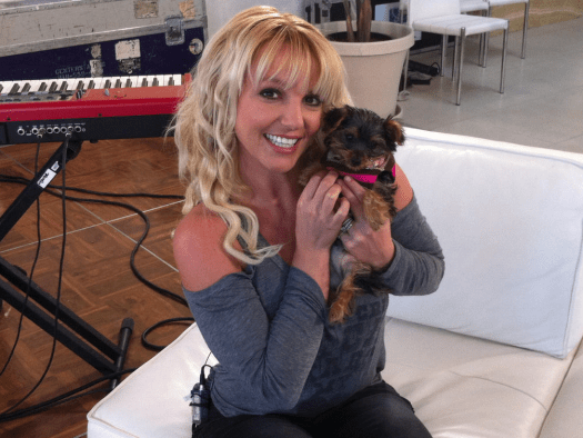 Britney Spears dog twitter