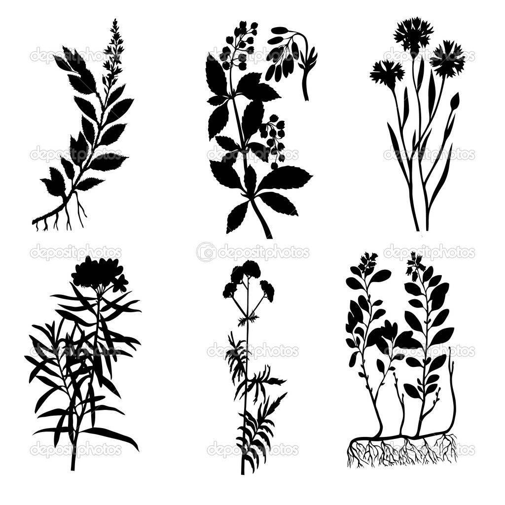 Vector Silhouettes Of The Medicinal Plants On White
