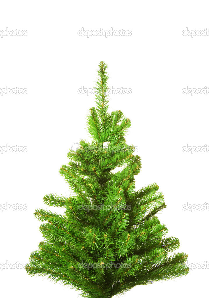 Christmas Tree Without Decoration Isolated On White
