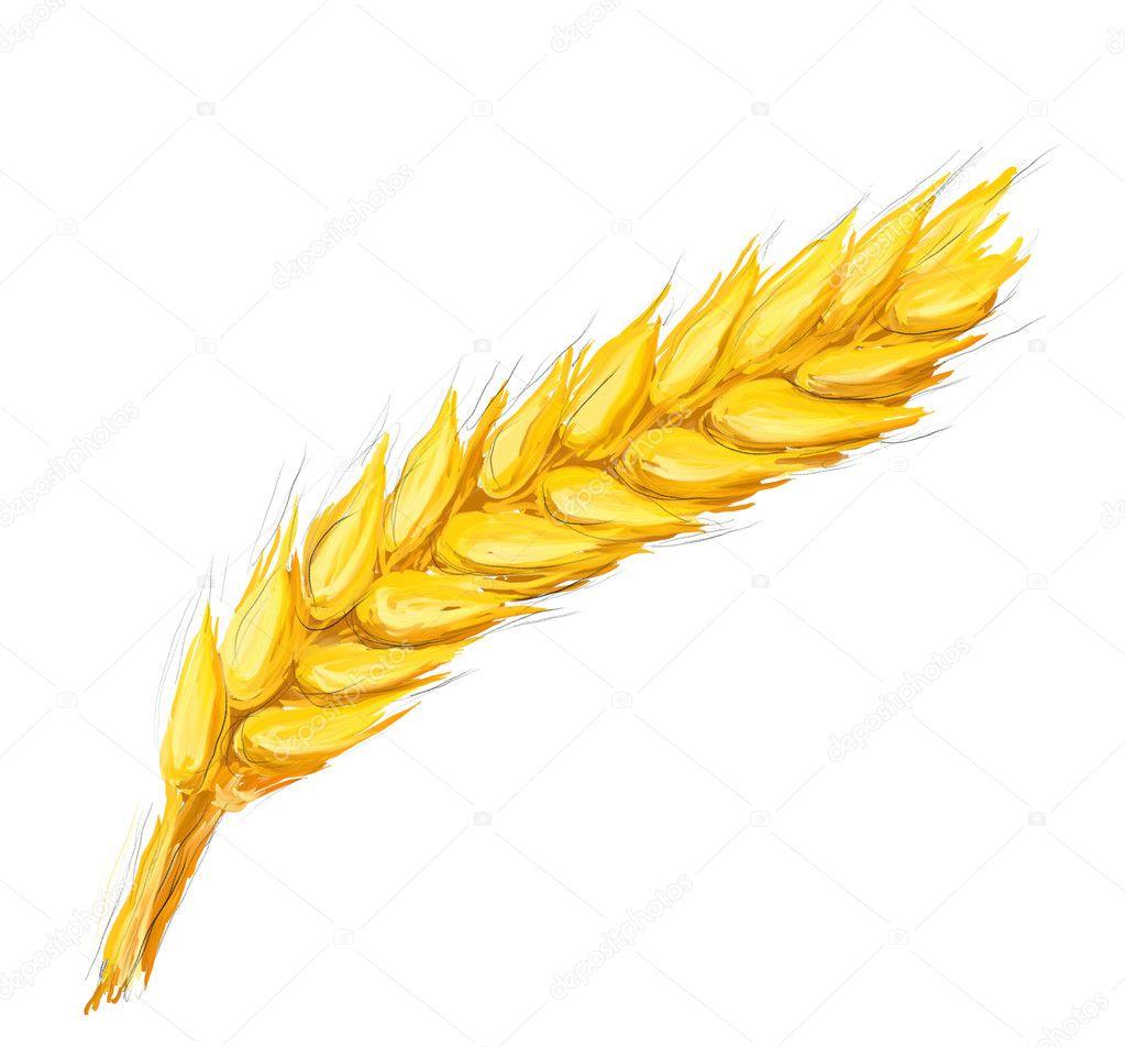 cob ear of corn clip art ear of corn coloring page ear of corn black