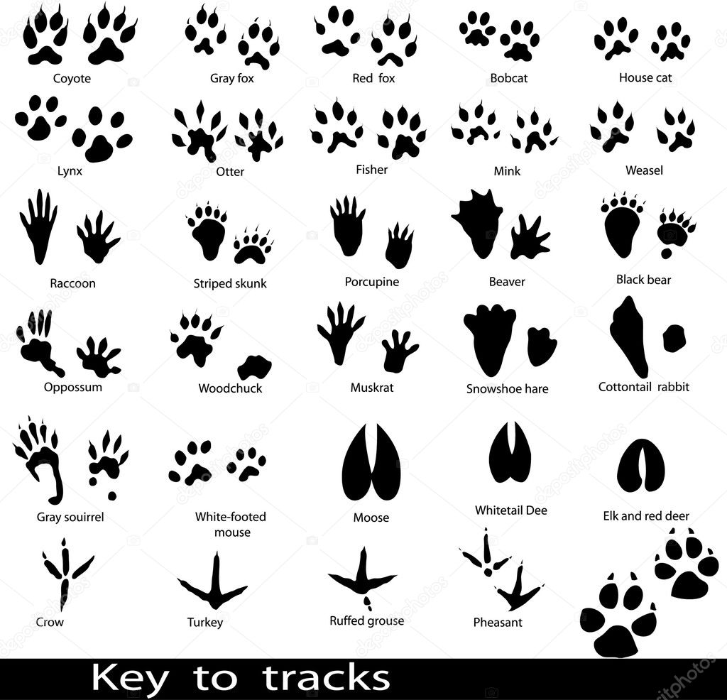 Vector Graphics Images Amp Illustrations Stock