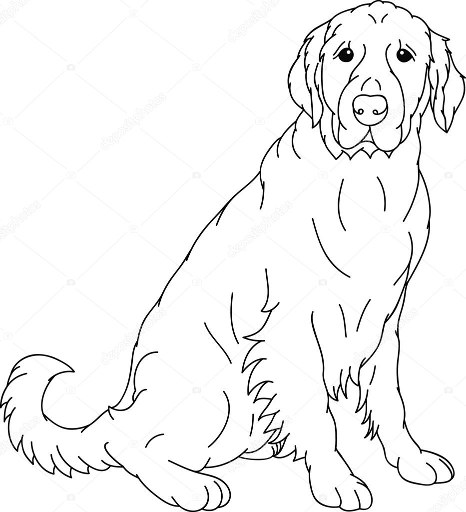 baby black lab colouring pages page 3