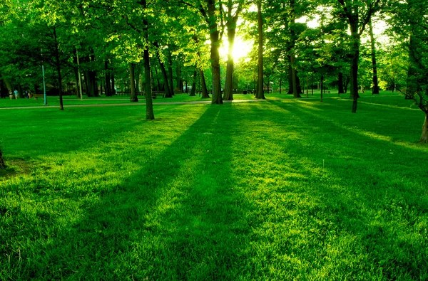 Greenery helps Eyes And Mental Health