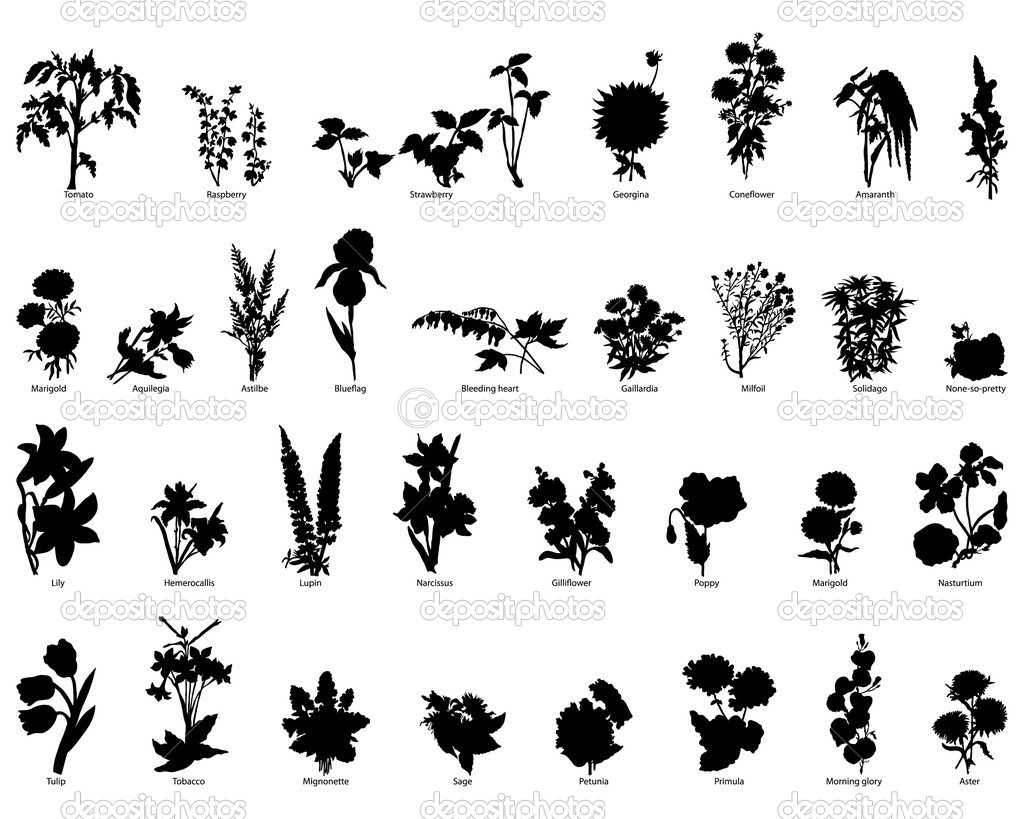 Set Of Plants