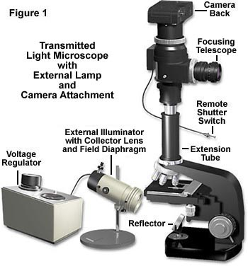 how to use a compound light microscope step by step