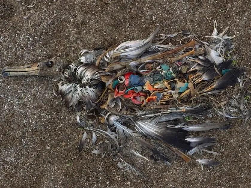 dead bird, plastic