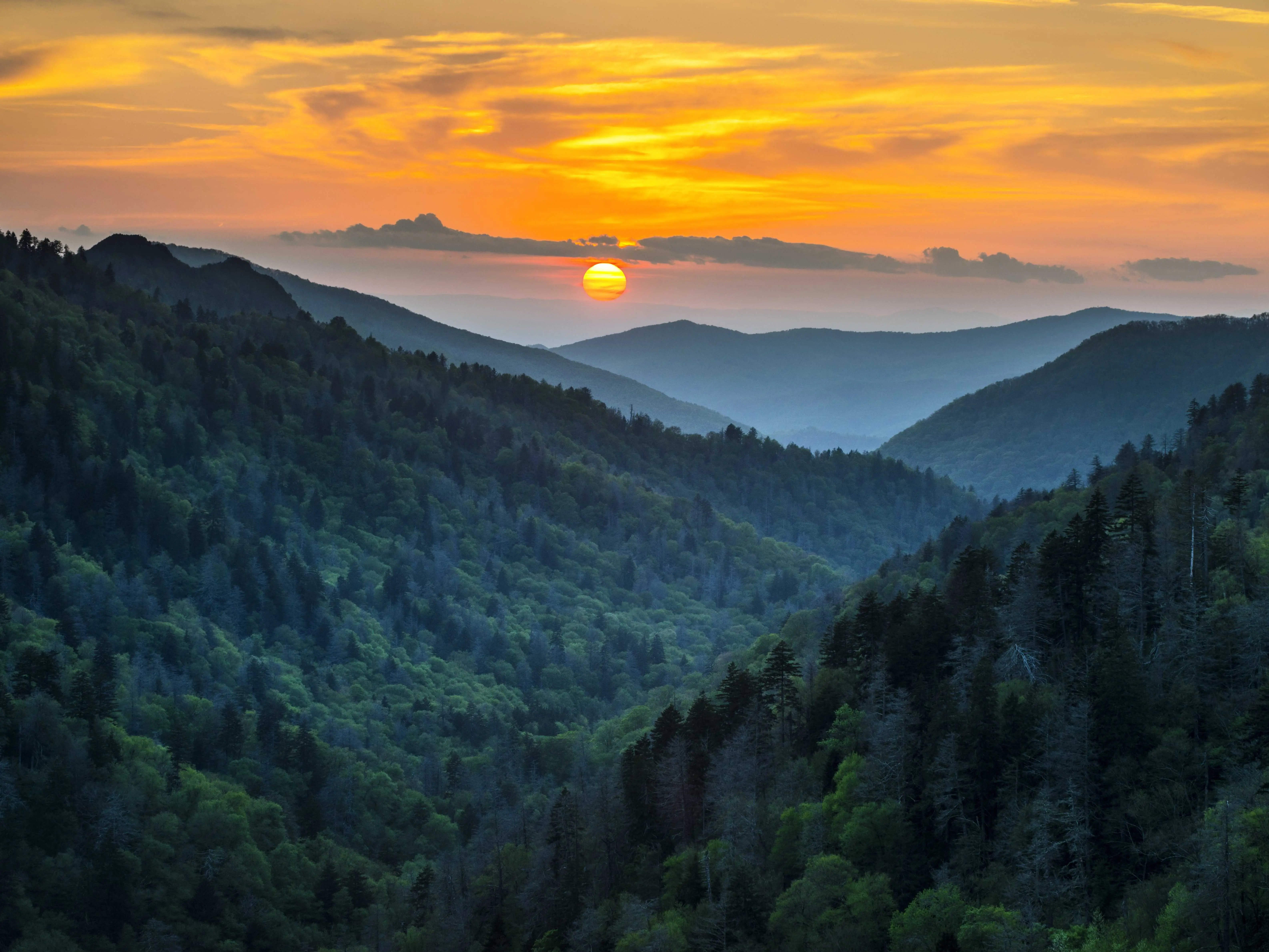 According to UNESCO, Great Smoky Mountains National Park, which stretches across Tennessee and North Carolina, has almost as many trees as all of Europe, which is why it is the most visited national park in the US.