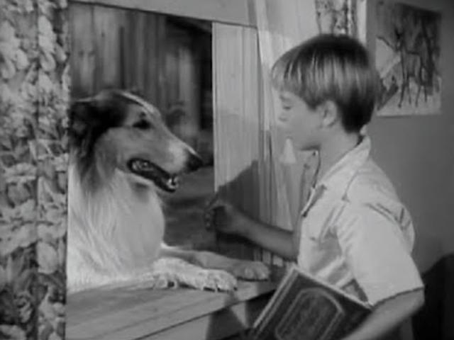 lassie season 1 1954