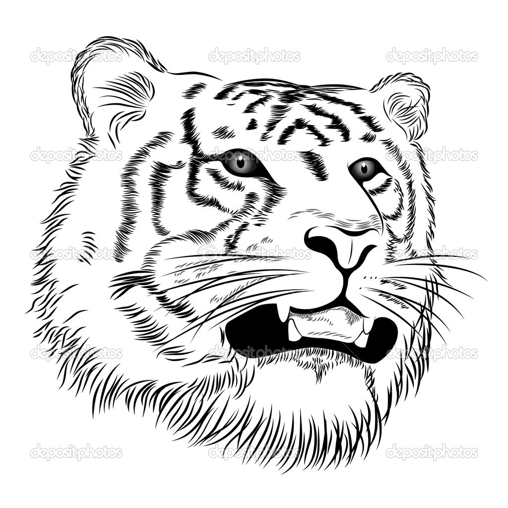 Vector Face Of A Tiger