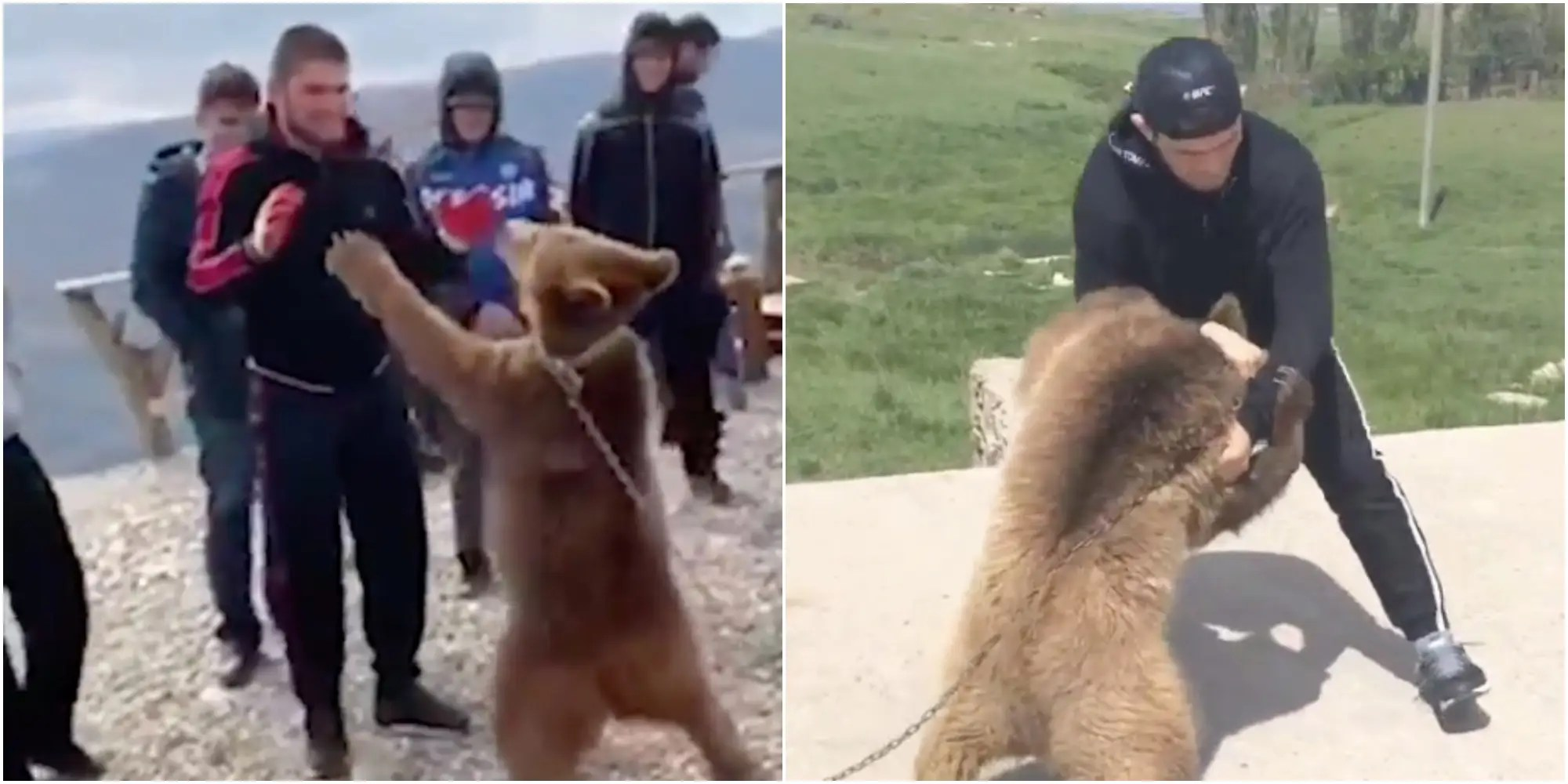 Khabib Nurmagomedov bear