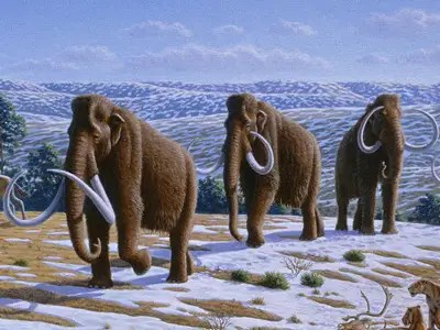 Woolly Mammoth (Extinct for ~10,000 years)