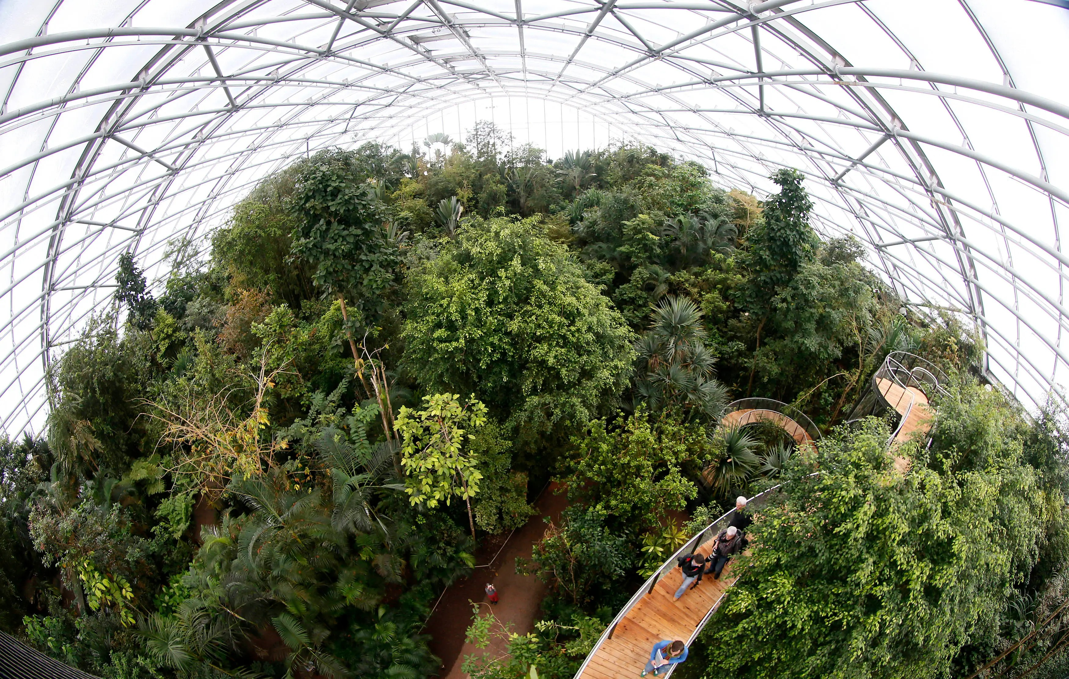 Visitors climb up stairs on the newly opened treetop path in the Masoala Rainforest hall at the zoo in Zurich.