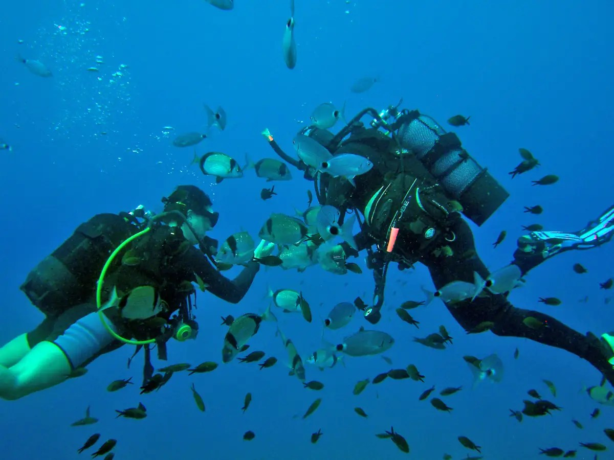 Scuba dive in the clear Mediterranean waters off the coast of Cyprus.