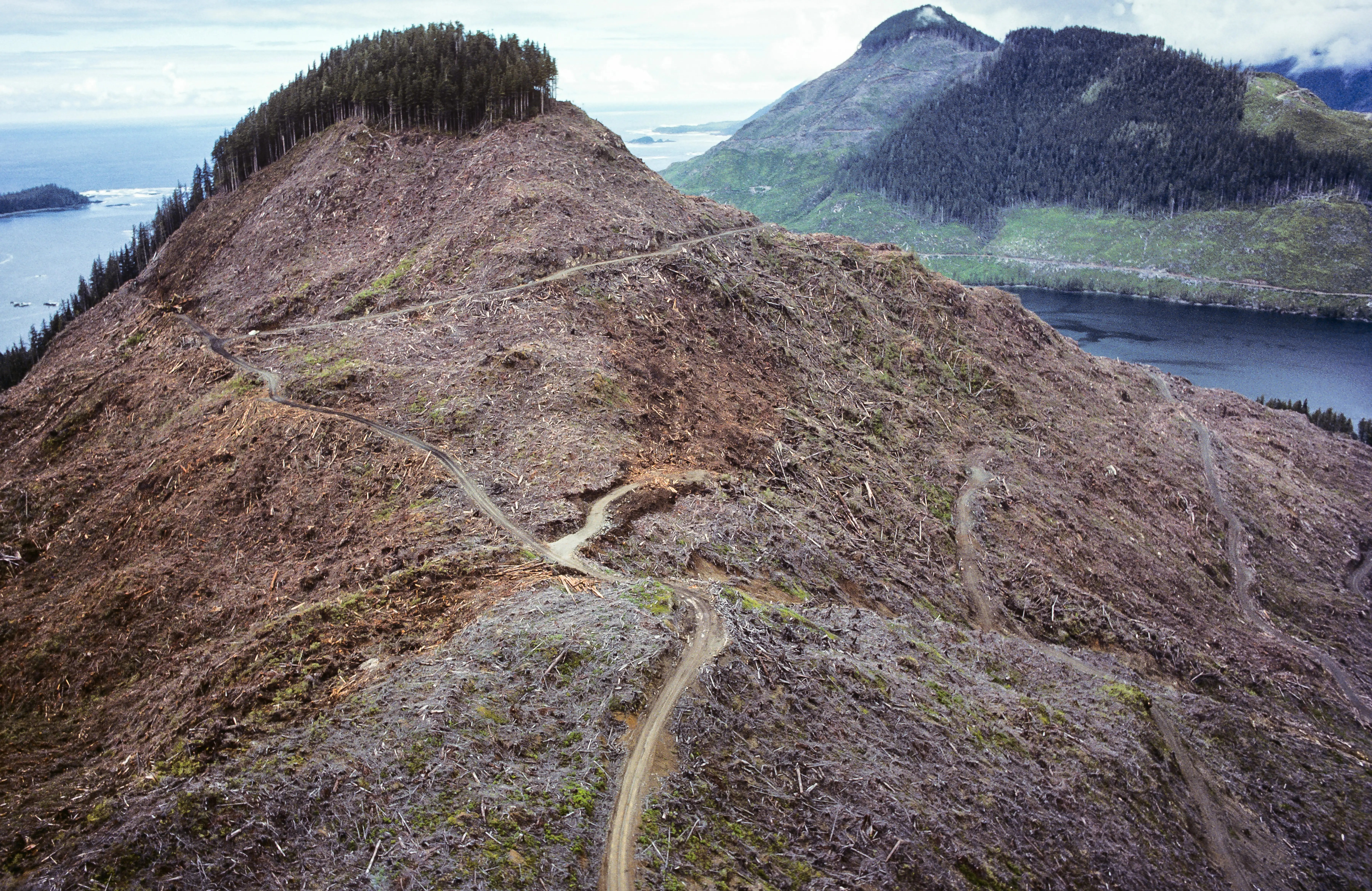 Canada has not been kind to its native forests, like this one on Vancouver Island.