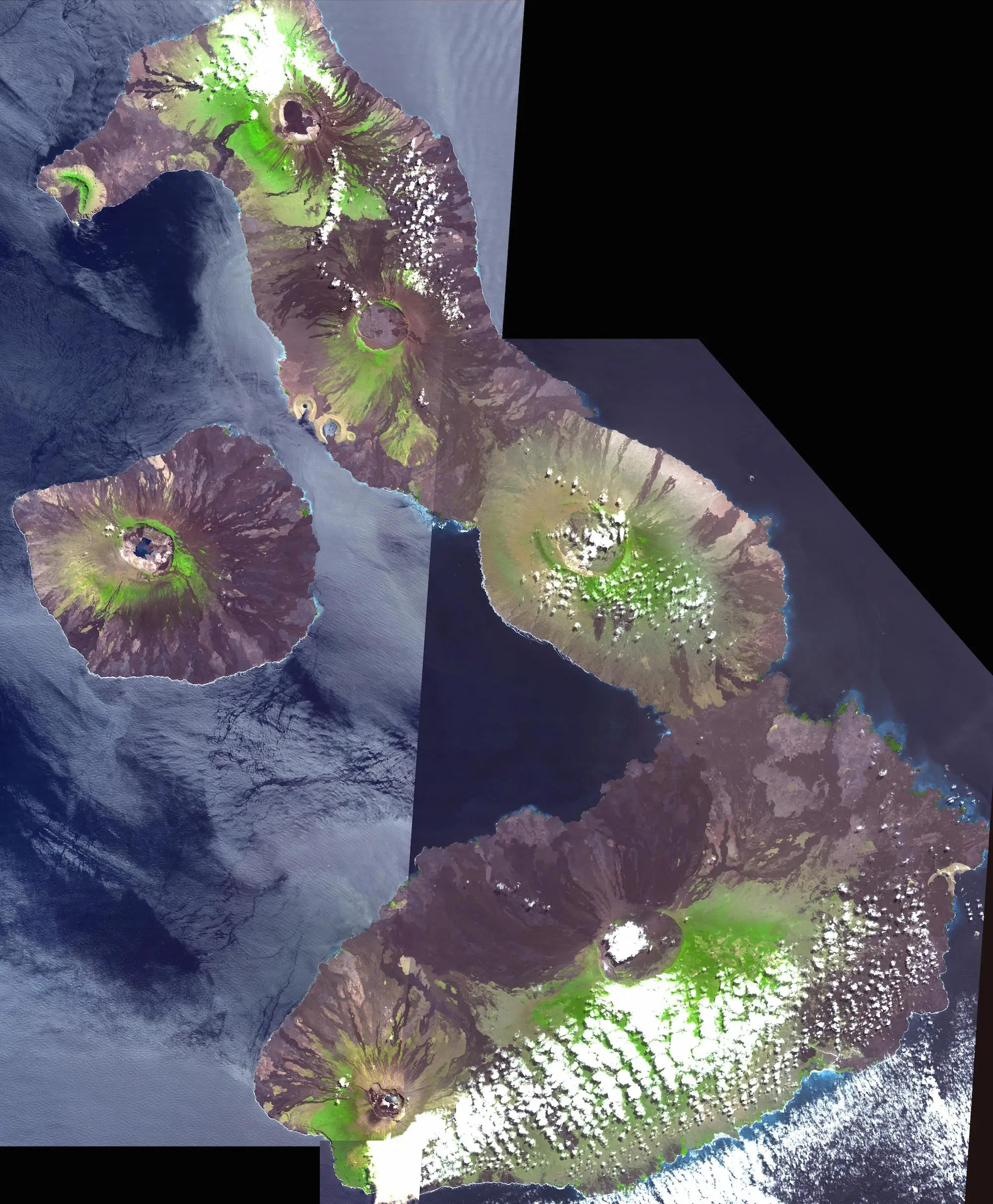 The volcanoes of the Galapagos Islands pushed them out of the Pacific Ocean.