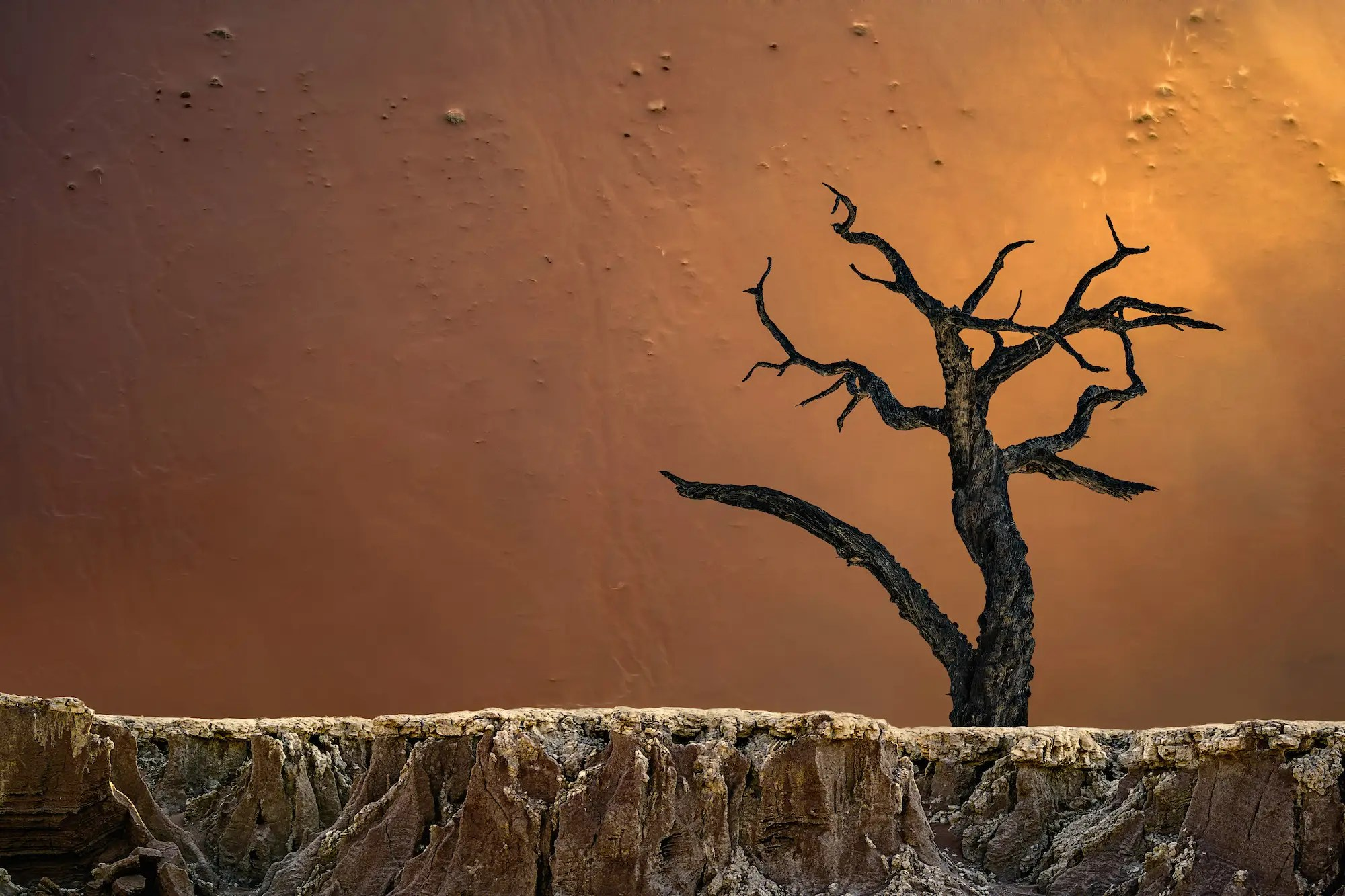 """And the contrast in texture here in this other shot from Deadvlei, Sossusvlei, Namibia, is fascinating. A fourth image from the third-place winner of the """"Photographer of the Year"""" contest."""