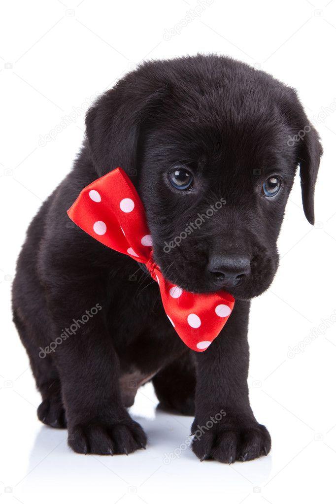 Filhote De Cachorro Bonito Preto Fotografias De Stock