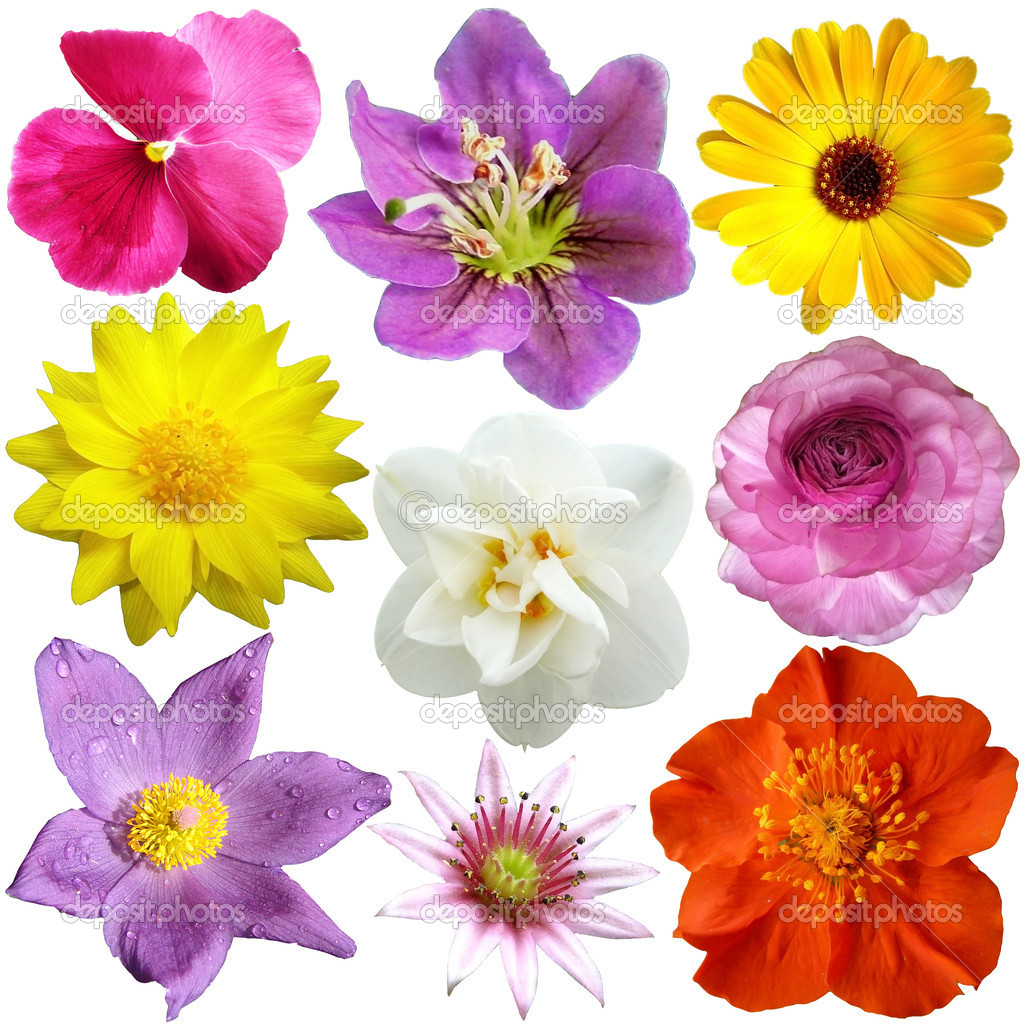 set of flowers in different shapes color stock photo  o april