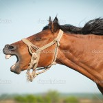 ᐈ Horse Pictures Funny Stock Images Royalty Free Funny Horse Pics Download On Depositphotos